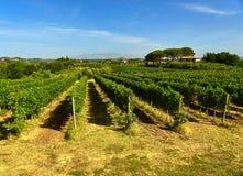Het landschap van de wijngaard Royalty-vrije Stock Fotografie