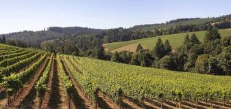 Het Landschap van de Wijngaard van de wijnmakerij Stock Fotografie