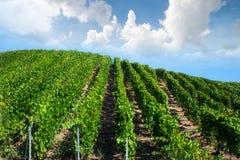 Het landschap van de wijngaardgolf, Montagne de Reims, Frankrijk Stock Foto
