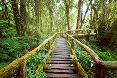 Het landschap van de wildernis Houten brug bij nevelig tropisch regenwoud Stock Foto's