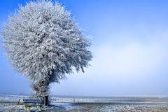 Het landschap van de winter één enkele boom Royalty-vrije Stock Afbeelding