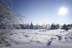 Het landschap van de winter. Royalty-vrije Stock Afbeelding