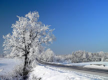 Het landschap van de winter Stock Fotografie
