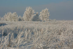 Het landschap van de winter Stock Foto