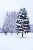 Het landschap van de winter Royalty-vrije Stock Foto's