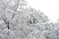 De winterlandschap Royalty-vrije Stock Foto
