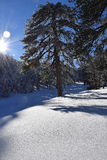 Het landschap van de winter Stock Afbeelding