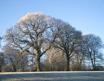 Het landschap van de winter - achtergrond Stock Afbeelding