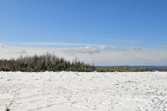 Het landschap van de winter in Ardennen Stock Afbeelding
