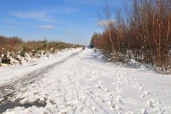 Het landschap van de winter in Ardennen Royalty-vrije Stock Foto