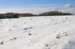 Het landschap van de winter in Ardennen Royalty-vrije Stock Afbeeldingen