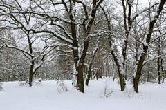 Het Landschap van de winter in Bos stock foto