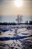 Het landschap van de winter in Centraal Rusland Stock Foto's
