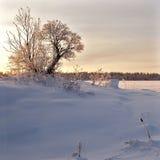 Het landschap van de winter. De achtergrond van de aard Stock Foto