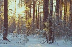 Het landschap van de winter De scène van de winter Stock Afbeeldingen