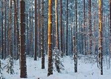 Het landschap van de winter De scène van de winter Stock Foto
