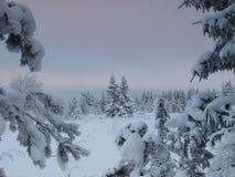 Het landschap van de winter door bos Stock Foto