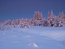 Het landschap van de winter door bos Stock Fotografie