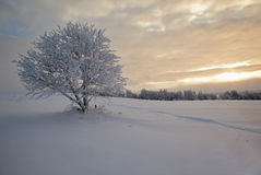 Het landschap van de winter. Eenzame boom op snow-covered FI Royalty-vrije Stock Foto's