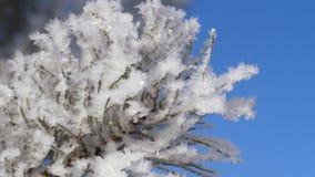 Het landschap van de winter De groei tegen de blauwe hemel stock footage