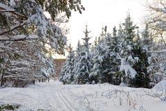 Het landschap van de winter in het bos met skiway Stock Afbeeldingen