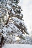 Het landschap van de winter in het bos met skiway Royalty-vrije Stock Afbeeldingen