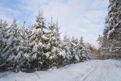 Het landschap van de winter in het bos met skiway Stock Foto's