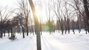 Het landschap van de winter Het park van de winter stock videobeelden