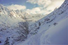 Het landschap van de winter Hoge Tatras Stock Afbeelding
