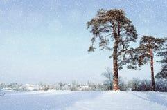 Het landschap van de winter Ijzige pijnboombomen in het het de winterbos en dorp op de achtergrond Royalty-vrije Stock Afbeeldingen