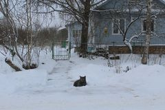 Het landschap van de winter De kat op de drempel Heel wat sneeuw Het wachten op de gastheren koud honger stock illustratie