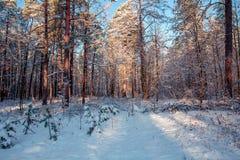 Het landschap van de winter Kerstmis achtergrondzonlicht in het de winterbos royalty-vrije stock afbeeldingen