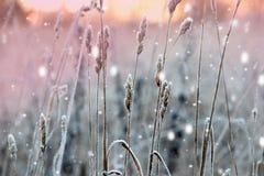 Het landschap van de winter Kerstmisachtergrond met witte sneeuwvlokken Zonlicht in het de winterbos stock foto
