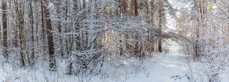 Het landschap van de winter Kerstmisachtergrond met witte sneeuwvlokken Zonlicht in het de winterbos royalty-vrije stock fotografie