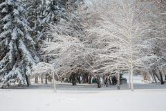 Het landschap van de winter Majestueus sneeuwpark europa stock foto
