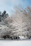 Het landschap van de winter Majestueus sneeuwpark europa royalty-vrije stock afbeeldingen
