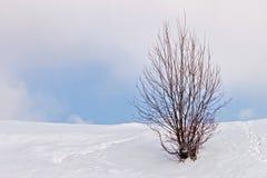 Het landschap van de winter met één enkele boom royalty-vrije stock foto