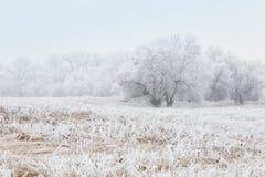 Het landschap van de winter met bevroren bomen Royalty-vrije Stock Afbeelding