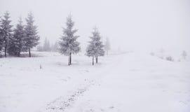 Het landschap van de winter met bomen Stock Foto