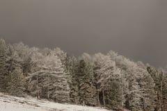 Het landschap van de winter met bomen Royalty-vrije Stock Foto