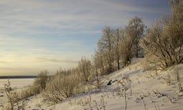 Het landschap van de winter met bomen stock fotografie