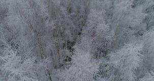 Het landschap van de winter met bos stock videobeelden