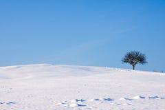 Het Landschap van de winter met Copyspace Royalty-vrije Stock Foto's