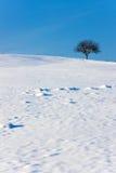 Het Landschap van de winter met Copyspace Stock Foto's