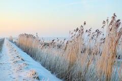 Het landschap van de winter met sneeuw Royalty-vrije Stock Foto
