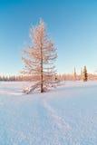 Het landschap van de winter met sneeuw Stock Foto