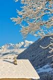 Het landschap van de winter met sneeuw Stock Afbeelding