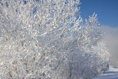 Het landschap van de winter met sneeuw Stock Afbeeldingen
