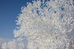 Het landschap van de winter met sneeuw Royalty-vrije Stock Foto's