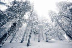 Het landschap van de winter met sneeuwbomen royalty-vrije stock fotografie